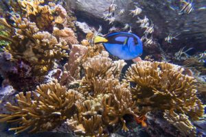 FDM-photos-corail-aquarium13