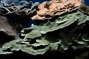 FDM-photos-corail-aquarium14