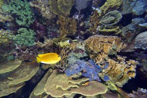 FDM-photos-corail-aquarium2