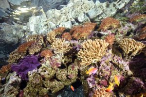 FDM-photos-corail-aquarium6