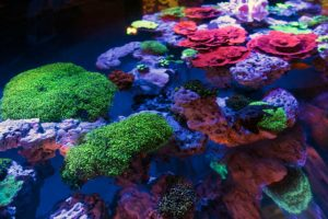 FDM-photos-corail-aquarium8